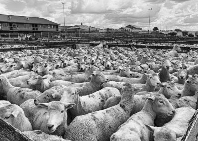 TK_Website_saleyards-1